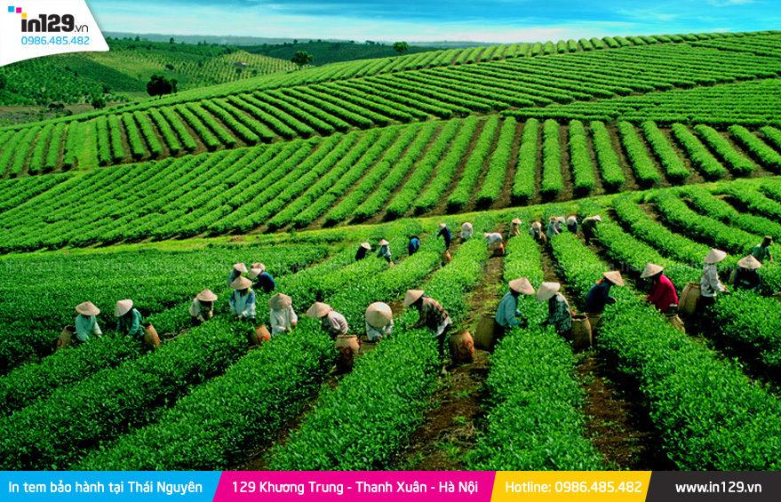 in tem bảo hành tại Thái Nguyên